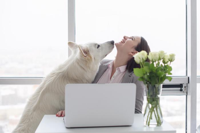 business-woman-at-home-office-creatinng-video-with-white-swiss-shepherd-dog-woman-with-laptop